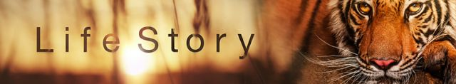Life Story (2014)