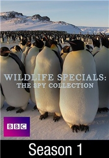 Wildlife Specials: The Spy Collection
