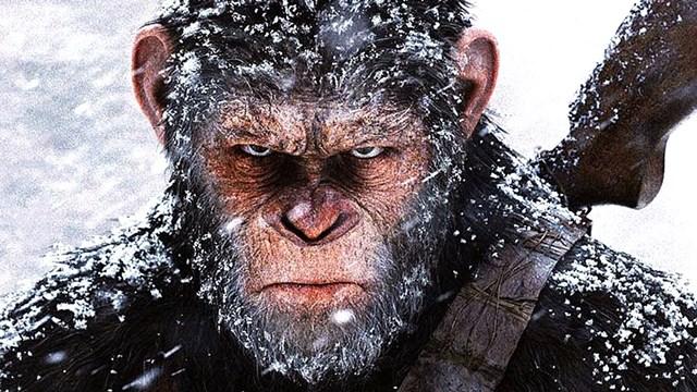 A gde su tu naši majmuni?