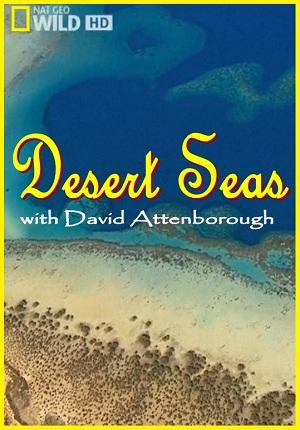Desert Seas