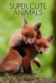 BBC Super Cute Animals