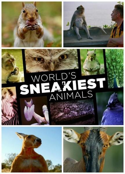 Natural Born Hustlers Aka World's Sneakiest Animals