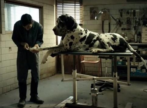 Dogman - Ozbiljan film