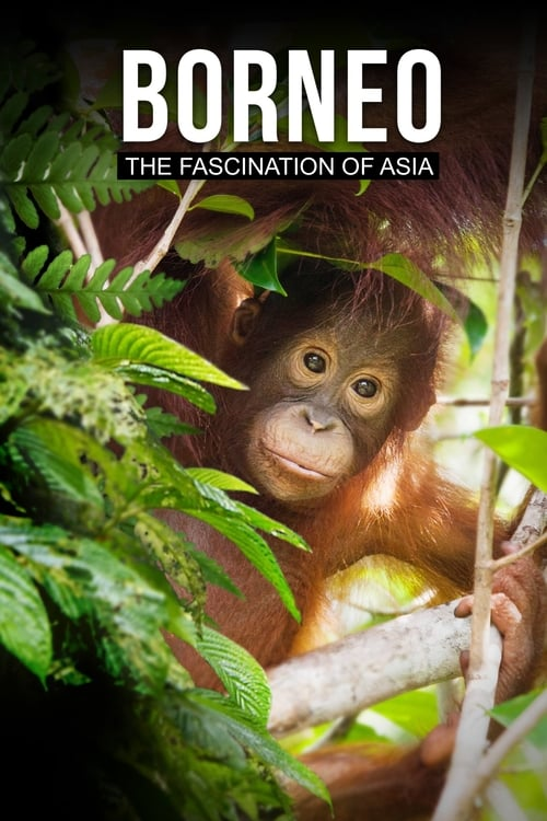 Borneo: The Fascination of Asia
